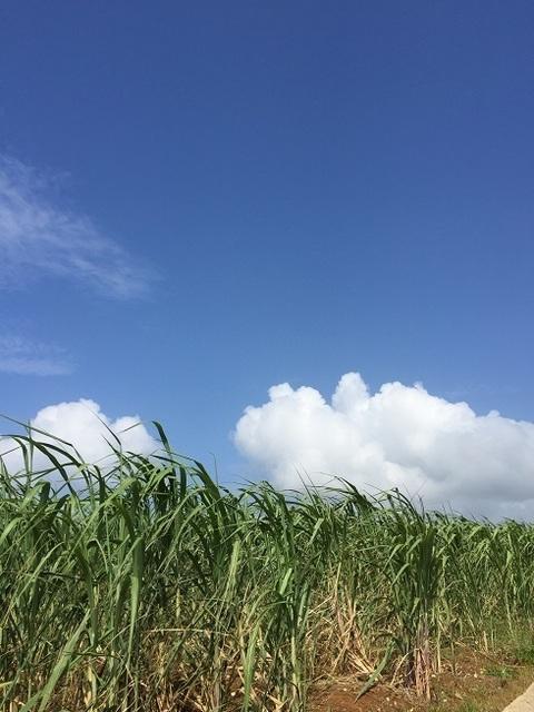久米島さとうきび畑.jpg